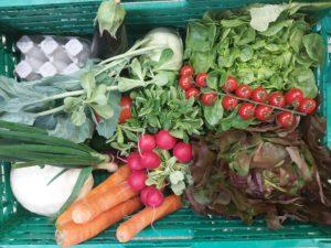 panier de légumes 2 300x225